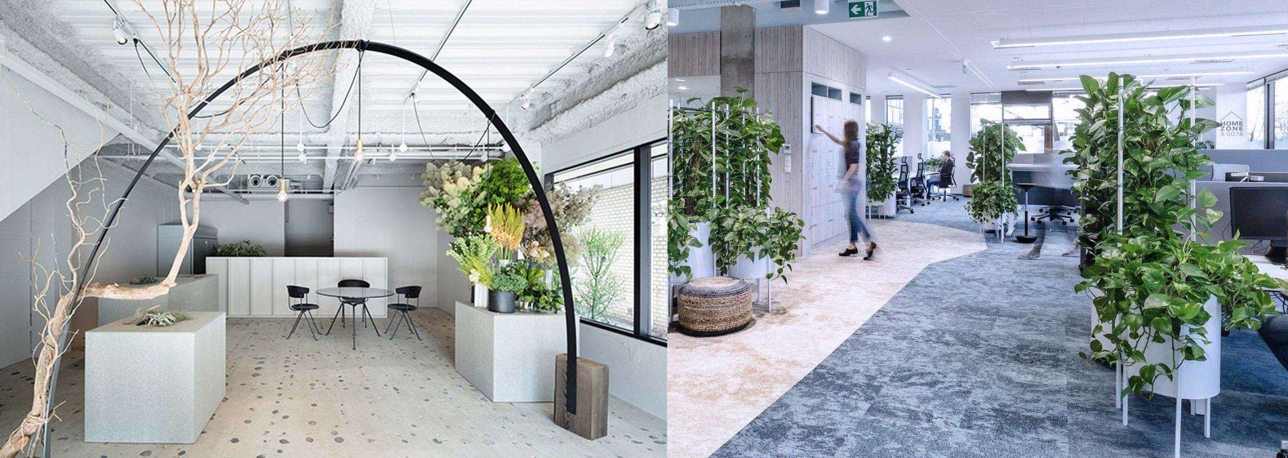 4- کاربرد و استفاده - گیاهان آپارتمانی - تجهیزات دکوراسیون - indoor plants - office plants - استفاده از گیاهان آپارتمانی - آبیاری گیاهان آپارتمانی اداری