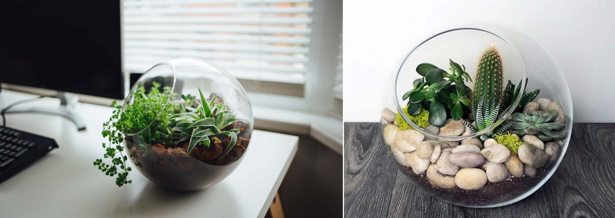 5- کاربرد و استفاده - تجهیزات دکوراسیون - گیاهان آپارتمانی - indoor plants - office plants - استفاده از گیاهان آپارتمانی - تراریوم در دفتر کار