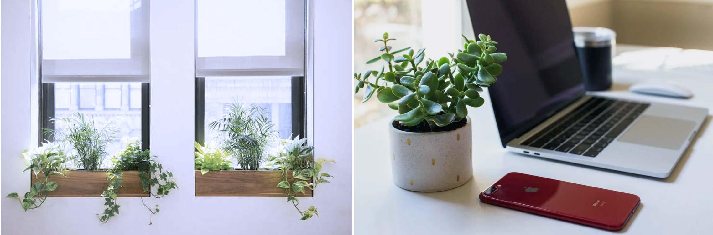 2- کاربرد و استفاده - گیاهان آپارتمانی - indoor plants - office plants - تجهیزات دکوراسیون - استفاده از گیاهان آپارتمانی - کاربرد گیاهان آپارتمانی