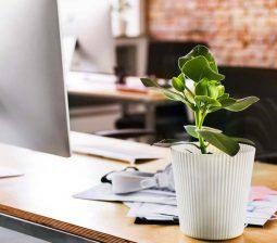 استفاده از گیاهان آپارتمانی در دکور دفتر کار