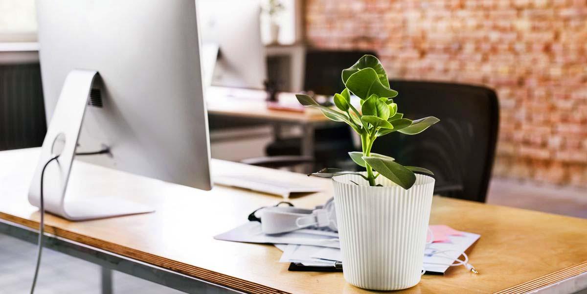 تجهیزات دکوراسیون - استفاده از گیاهان آپارتمانی در محیط کار
