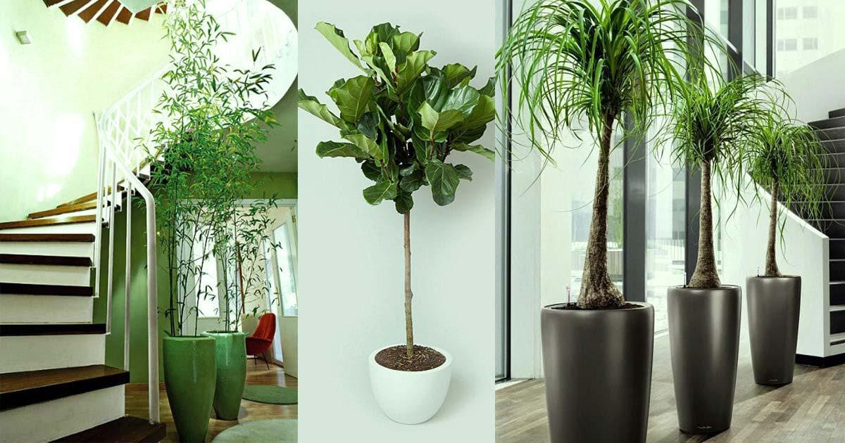 گیاهان آپارتمانی - indoor plants - office plants - استفاده از گیاهان آپارتمانی - کاربرد گیاهان آپارتمانی