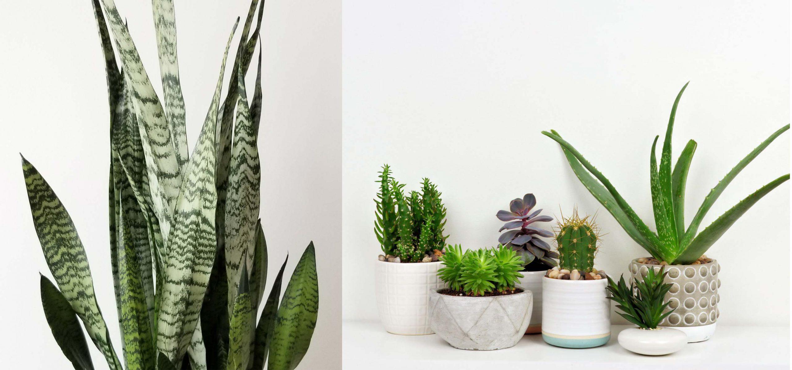 3- کاربرد و استفاده - گیاهان آپارتمانی - indoor plants - office plants - تجهیزات دکوراسیون - استفاده از گیاهان آپارتمانی - کاربرد گیاهان آپارتمانی