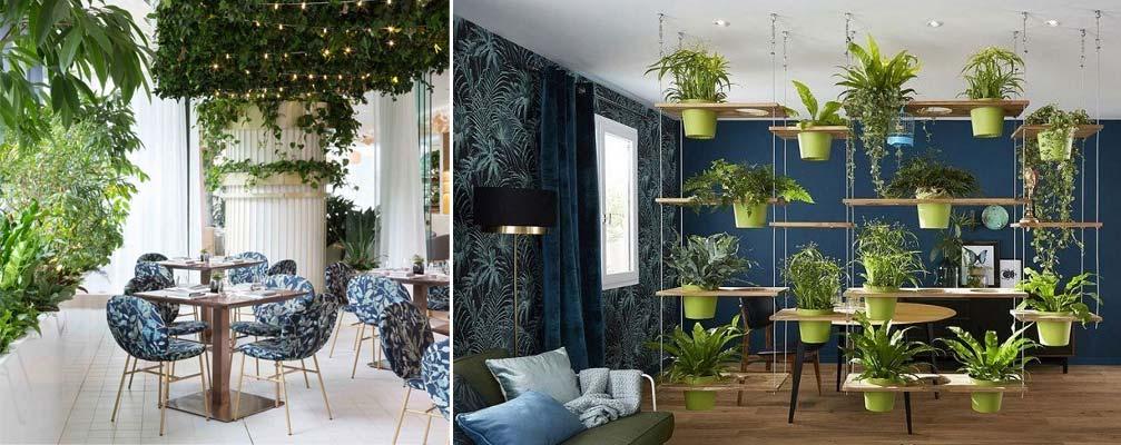 5- کاربرد و استفاده - تجهیزات دکوراسیون - گیاهان آپارتمانی - indoor plants - office plants - استفاده از گیاهان آپارتمانی - آویزان کردن گیاهان از سقف